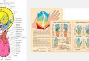 soorten reflexzone kaarten